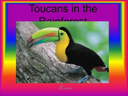 Toucans in the Rainforest Emma. Introduction The tropical rainforests of the world are important to us. The tropical rainforest is very helpful. There.