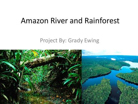 Amazon River and Rainforest Project By: Grady Ewing.
