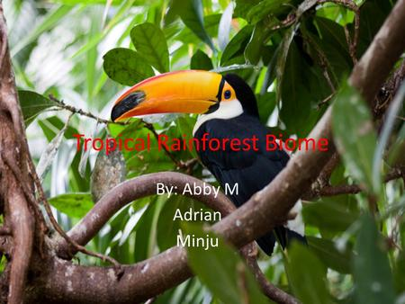 Tropical Rainforest Biome By: Abby M Adrian Minju.