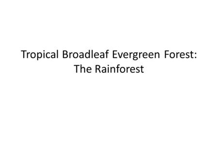 Tropical Broadleaf Evergreen Forest: The Rainforest.