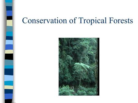Conservation of Tropical Forests. Veranda AWNC in T&T.