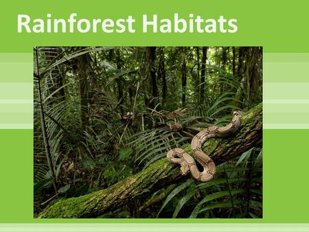  Tropical forests are characterized by the greatest diversity of species. They occur near the equator. Because the equator is evenly heated by the sun,