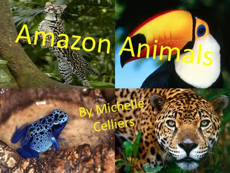 Amazon Animals By Michelle Celliers. Contents Jaguar Ocelot Toco Toucan Poisonous Dart Frog.