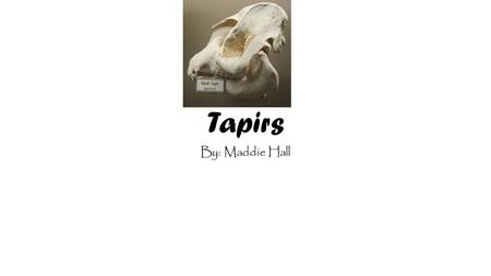 Tapirs By: Maddie Hall. Facts about Tapirs -They have nasty bites. -They are fat. -They have a good sense of smell because of their snouts. -They are.