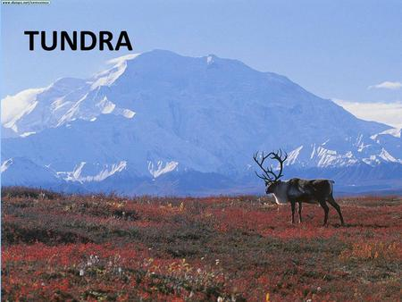 TUNDRA. TUNDRA TEMPERATURE Very Cold TUNDRA PRECIPITATION very little.