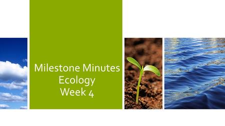 Milestone Minutes Ecology Week 4. Organisms are dependent on one another within an ecosystem. Species – one specific type of organism, individual Population.