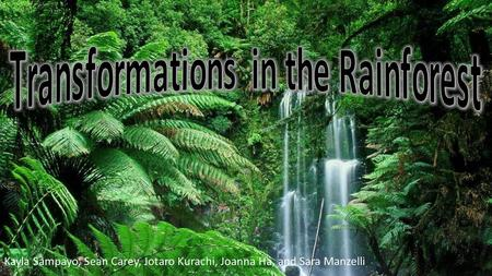 Transformations in the Rainforest