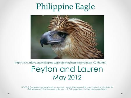Philippine Eagle Peyton and Lauren May 2012 NOTICE: The following presentation contains copyrighted materials used under the Multimedia Guidelines and.