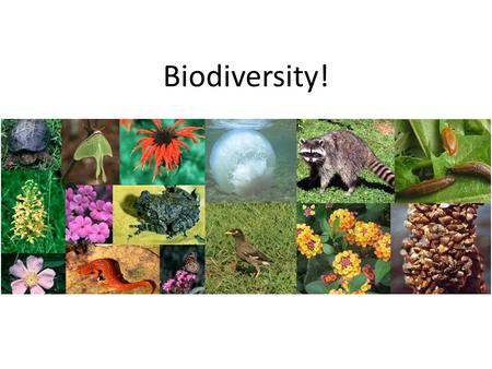 Biodiversity!. How many species are there in the world?