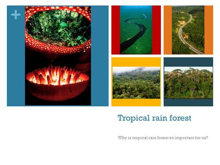 + Tropical rain forest Why is tropical rain forest so important for us?