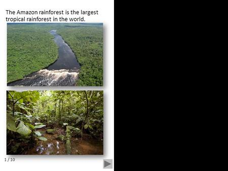 The Amazon rainforest is the largest tropical rainforest in the world. 1 / 10.