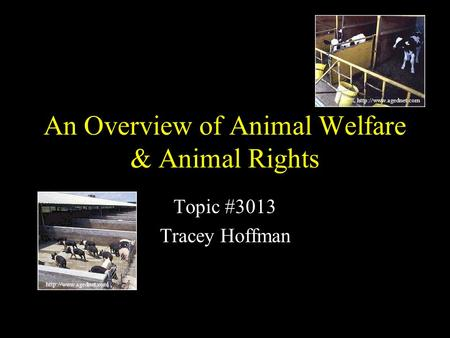 An Overview of Animal Welfare & Animal Rights Topic #3013 Tracey Hoffman