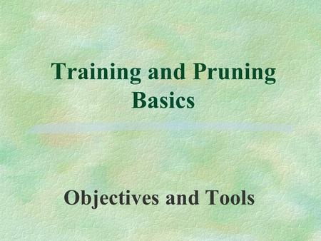 Training and Pruning Basics Objectives and Tools.