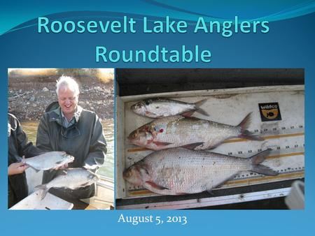 August 5, 2013. Topics to be Discussed Brief history of gizzard shad in Roosevelt Prior survey results Confounding issues Key findings from UT surveys.