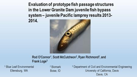 Evaluation of prototype fish passage structures in the Lower Granite Dam juvenile fish bypass system – juvenile Pacific lamprey results 2013- 2014. Rod.