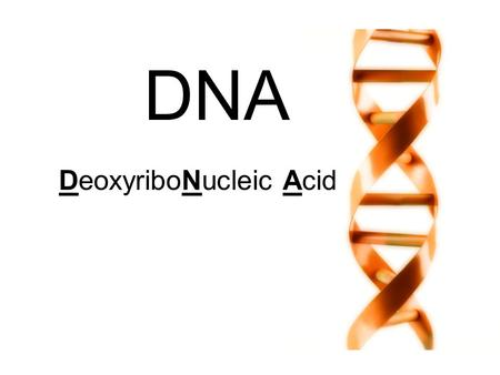 DNA DeoxyriboNucleic Acid. DNA! Makes up chromosomes Contains genes: chunks of DNA that code for certain traits.