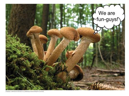 We are fun-guys!. Copyright © 2008 Pearson Education, Inc., publishing as Pearson Benjamin Cummings Fungi are diverse and widespread 100,000 described.