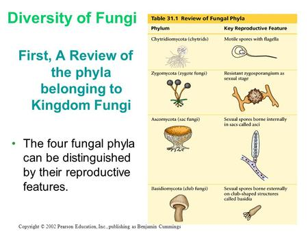 First, A Review of the phyla belonging to Kingdom Fungi