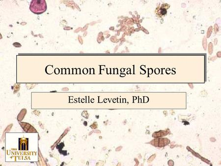 Common Fungal Spores Estelle Levetin, PhD. Fungal Spore Characteristics Spore size Spore shape Number of cells Attachment Scars Wall characteristics Spore.