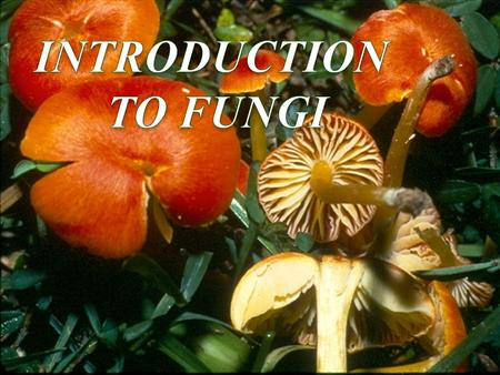 INTRODUCTION TO FUNGI.