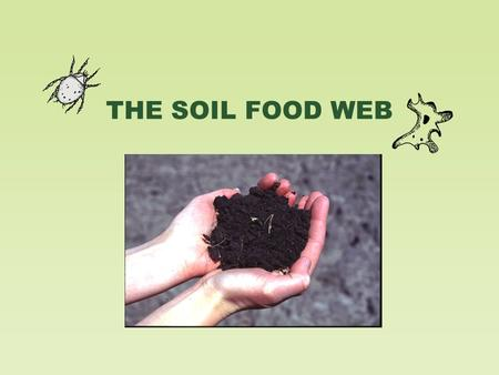 THE SOIL FOOD WEB. Soil Biology and the Landscape.