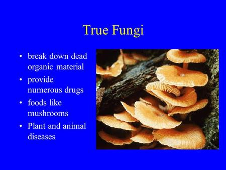 True Fungi break down dead organic material provide numerous drugs
