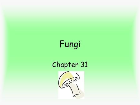 Fungi Chapter 31. Fungi - heterotrophs - eat by absorbing nutrients - by secreting enzymes to outside which digest food around them; fungi absorbs food.