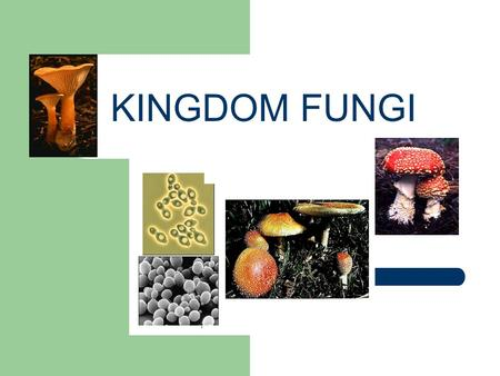 KINGDOM FUNGI CHARACTERISTICS of FUNGI The Kingdom Fungi includes eukaryotic, sessile heterotrophs that include a wide variety of organisms from unicellular.