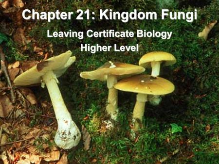 Chapter 21: Kingdom Fungi Leaving Certificate Biology Higher Level.