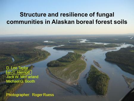 Structure and resilience of fungal communities in Alaskan boreal forest soils D. Lee Taylor Ian C. Herriott Jack W. McFarland Michael G. Booth Photographer: