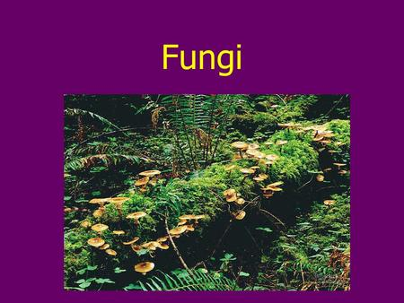 Fungi. Overview Fungi are eukaryotes Most are multicellular Differ from other eukaryotes in nutritional mode, structural organization, growth & reproduction.
