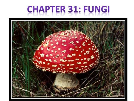 How do Fungi acquire nutients? They are Heterotrophs that get nutrition from absorption -- secretes hydrolytic enzymes into food then absorbs -- therefore.