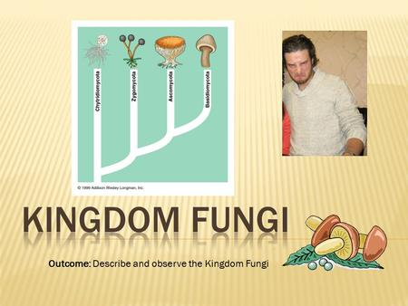 Kingdom Fungi Outcome: Describe and observe the Kingdom Fungi.