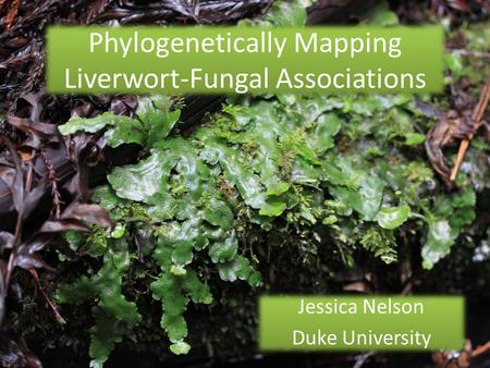 Phylogenetically Mapping Liverwort-Fungal Associations Jessica Nelson Duke University Jessica Nelson Duke University.