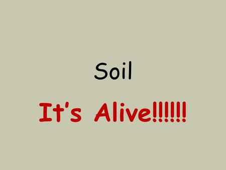 Soil It's Alive!!!!!!. What is soil? Soil is the top layer of the Earth's surface. You might call it dirt.