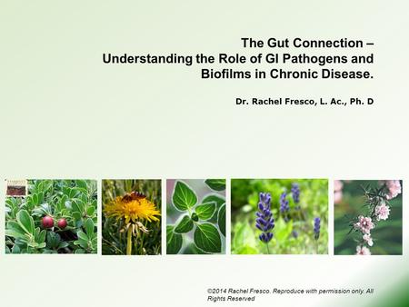 The Gut Connection – Understanding the Role of GI Pathogens and Biofilms in Chronic Disease. Dr. Rachel Fresco, L. Ac., Ph. D Today I want to pull together.