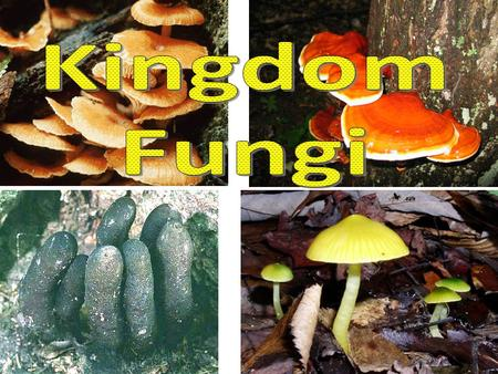Fungi Basics Heterotrophs –Cannot perform photosynthesis –Release enzymes to absorb nutrients Cell composition similar to animals Reproduction: Sexual.