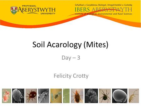 Soil Acarology (Mites) Day – 3 Felicity Crotty. >30 taxa.