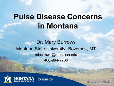 Pulse Disease Concerns in Montana Dr. Mary Burrows Montana State University, Bozeman, MT 406-994-7766.