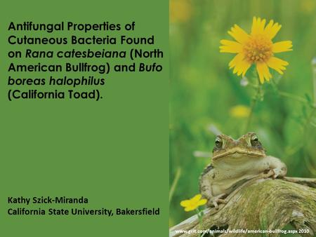 Antifungal Properties of Cutaneous Bacteria Found on Rana catesbeiana (North American Bullfrog) and Bufo boreas halophilus (California Toad). Kathy Szick-Miranda.