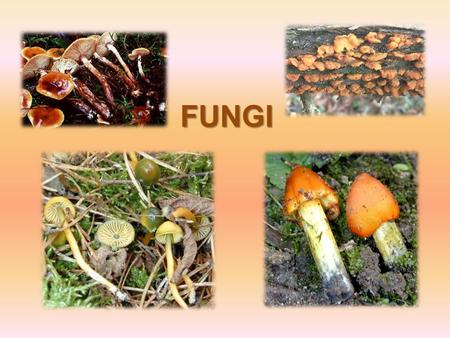 FUNGI. The Fungi kingdom was grouped with plants in the past. This was because its parts and life style often resemble plants. Fungi cannot make their.
