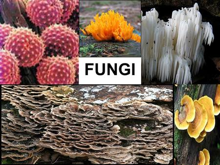 FUNGI. YOU MUST KNOW… THE CHARACTERISTICS OF FUNGI IMPORTANT ECOLOGICAL ROLES OF FUNGI IN MYCORRHIZAL ASSOCIATIONS, AND AS DECOMPOSERS AND PARASITIC PLANT.