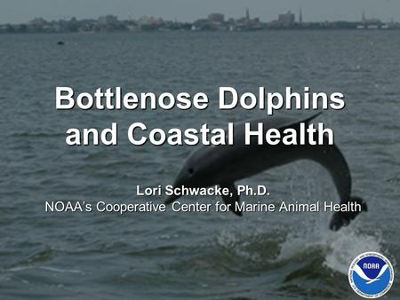 Bottlenose Dolphins and Coastal Health Lori Schwacke, Ph.D. NOAA's Cooperative Center for Marine Animal Health.