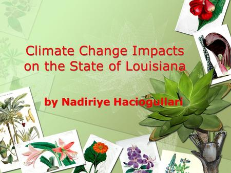 Climate Change Impacts on the State of Louisiana by Nadiriye Haciogullari.