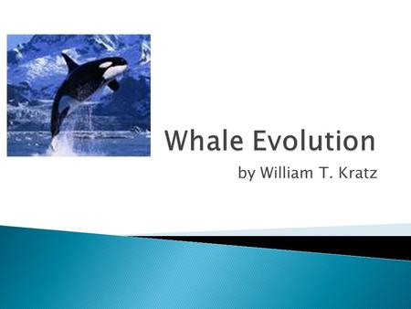 By William T. Kratz.  historical research of the whale  fossil records  related species geographic distribution  whale evolution video.