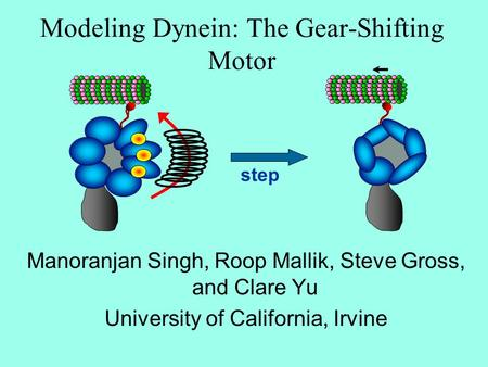 Modeling Dynein: The Gear-Shifting Motor Manoranjan Singh, Roop Mallik, Steve Gross, and Clare Yu University of California, Irvine step.