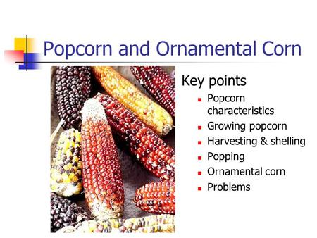 Popcorn and Ornamental Corn Key points Popcorn characteristics Growing popcorn Harvesting & shelling Popping Ornamental corn Problems.