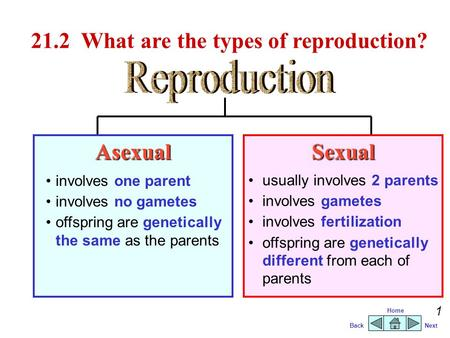 21.2 What are the types of reproduction?