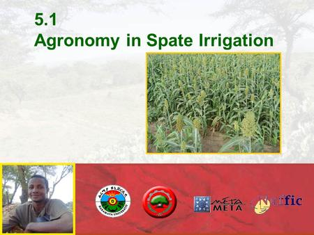5.1 Agronomy in Spate Irrigation. AGRONOMY IN SPATE IRRIGATION  Yields in spate irrigation are considerably higher than in rain-fed agriculture  There.