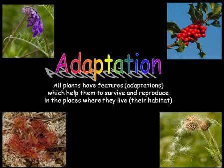 All plants have features (adaptations) which help them to survive and reproduce in the places where they live (their habitat)